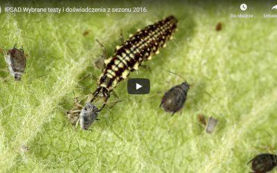 Gąsienice zwójkówek – multimedia