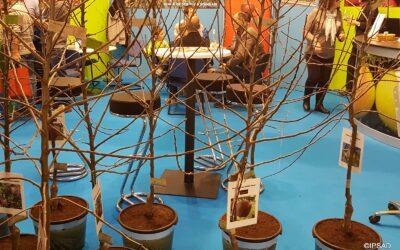 4-08 O czym warto pamiętać zamawiając drzewka